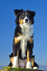 Leinmehl für Hunde
